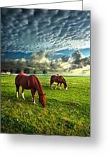 Hailey's Horses Greeting Card
