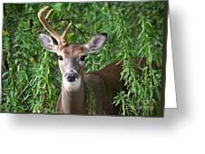 Half A Buck Greeting Card