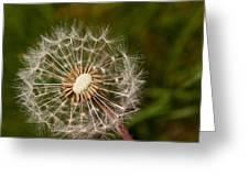 Half A Dandelion Greeting Card