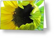 Half-bloom Beauty Greeting Card