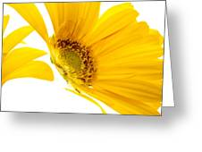 Half Yellow Gerbera Greeting Card
