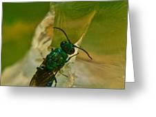 Halicid Bee 12 Greeting Card