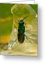 Halicid Bee 15 Greeting Card