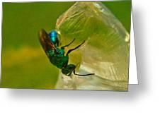 Halicid Bee 20 Greeting Card