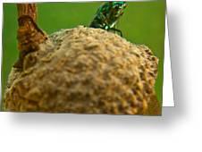 Halicid Bee 21 Greeting Card