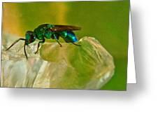 Halicid Bee 22 Greeting Card