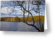 Hall Lake In Autumn No 0118 Greeting Card