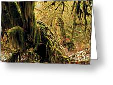 Hall Of Mosses Greeting Card