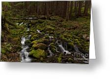 Hall Of The Mosses Greeting Card