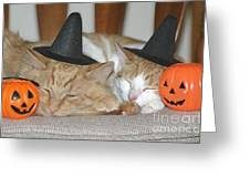 Halloween Party Animals Greeting Card