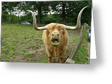 Hamish Highland Bull Greeting Card