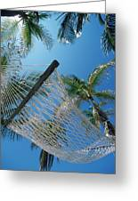 Hammock And Palm Tree, Great Barrier Greeting Card