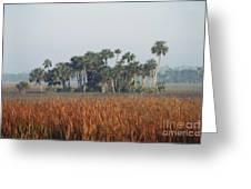 Hammock, Everglades National Park Greeting Card
