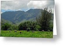 Hanalei Horses Greeting Card