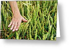 Hand Caressing Wheat Greeting Card