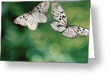 Handkerchief Butterfly Or Wood Nymph Greeting Card
