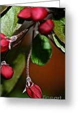 Hanging By A Stem Greeting Card