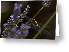 Hanging In The Lavender Greeting Card