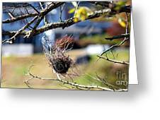 Hanging On Greeting Card by Lorraine Louwerse