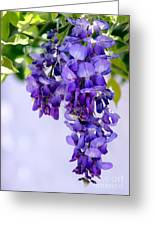Hanging Purple Passion Greeting Card