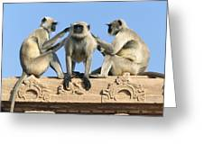 Hanuman Langurs Grooming Greeting Card