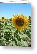 Happiness Is A Sunflower Greeting Card