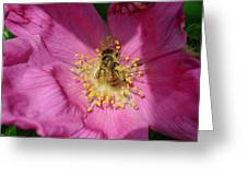 Happy As Can Bee Greeting Card