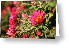 Happy Aster Greeting Card