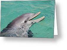 Happy Atlantic Bottlenose Dolphin Greeting Card