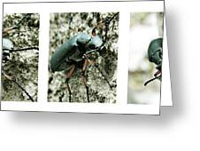 Happy Beetle Greeting Card