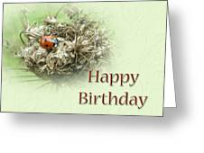 Happy Birthday Greeting Card - Ladybug On Dried Queen Anne's Lace Greeting Card