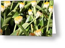Happy Flower Forest Greeting Card