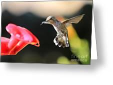 Happy Hummingbird Greeting Card