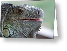 Happy Lizard Greeting Card
