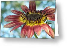 Happy Red Sunflower Greeting Card