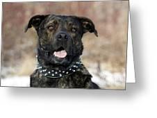 Happy Rescue Pooch Greeting Card