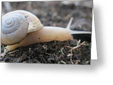 Happy Snail Greeting Card