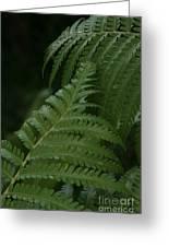 Hapuu Pulu Hawaiian Tree Fern - Cibotium Splendens Greeting Card