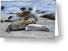 Harbor Seal Phoca Vitulina Mother Greeting Card