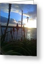 Harbor Sun Greeting Card