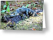 Hard Day In The Swamp - Digital Art Greeting Card