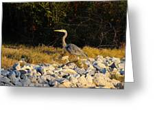 Hard Rock Heron Greeting Card