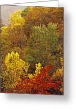 Hardwood Forest With Maple And Oak Greeting Card