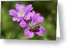 Hardy Geranium And Honey Bee Greeting Card