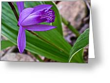 Hardy Orchid 3 Greeting Card