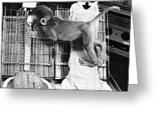 Harlows Monkey Experiment Greeting Card
