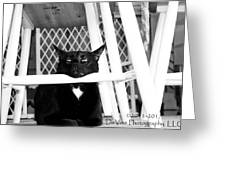 Harry One Twisted Cat Greeting Card