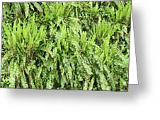 Hart's Tongue Fern Greeting Card by Adrian Bicker
