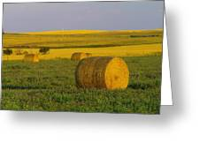 Harvest In Montana Greeting Card