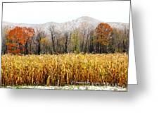 Harvest Snow Greeting Card by Carolyn Postelwait